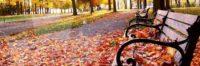 cnwc-newsletter-fall