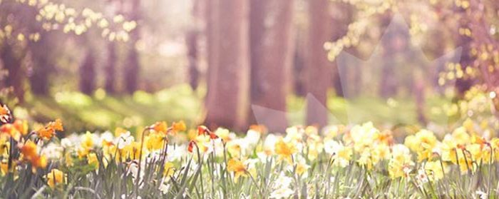 cnwc-newsletter-spring